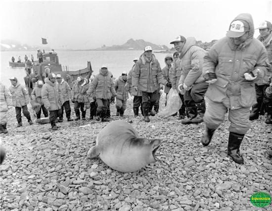 5月22日,南极条约协商会议首次在中国召开。作为负责任大国,我国正以积极的姿态参与南极事务。中国的南极考察历史仅有短短的33年,但这33年来,我国向极地考察强国的目标不断迈进。   1984年,中国首支南极洲考察队成立。队长郭琨率领考察队员奔赴南极,仅用40天就建成长城站。此后,我国相继建成了中山站、昆仑站和泰山站,如今,第五个中国考察站也已经在罗斯海地区完成规划选址,即将开建。  这是向阳红10号科学考察船在民防湾抛锚(资料照片)。中国南极考察船队于1984年12月26日胜利驶抵南极洲乔治岛民防湾